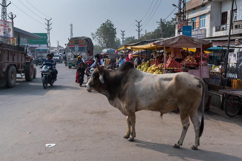 Street scene, village of Lalsot, Rajasthan.