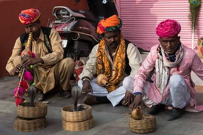 Cobra snake charmers, Jaipur.