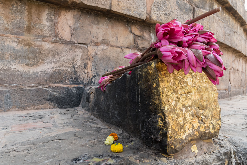 Visitors leave fresh lotus flowers and gold foil on a stone at the base of the Dhamekh Stupa, said to house some of the bones of Buddha himself.