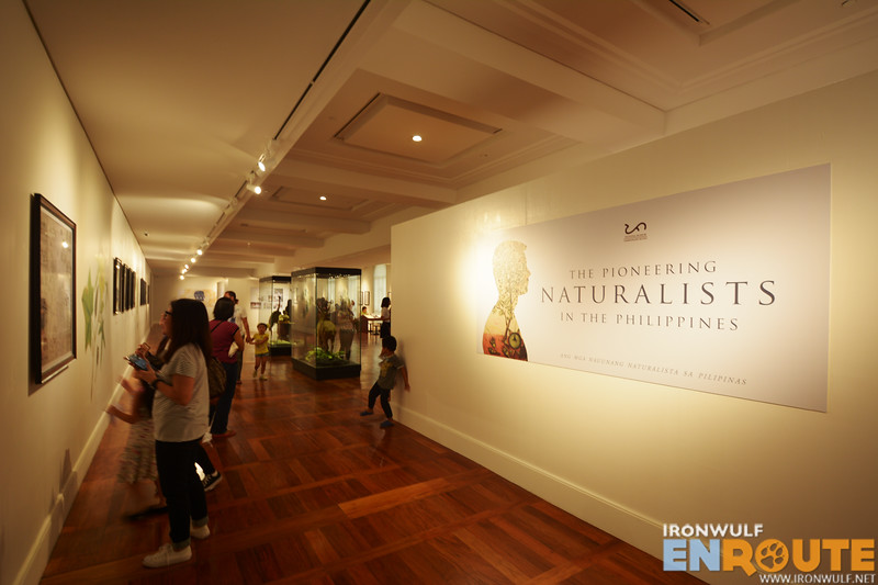 The Naturalist gallery
