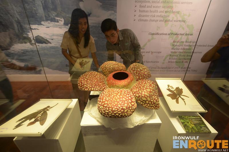 Rafflesia replica