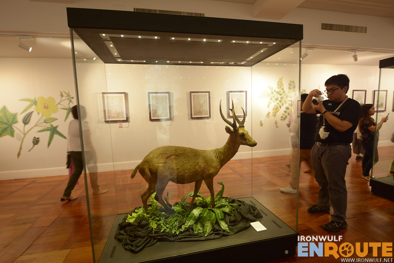 Replica of our Philippine deer