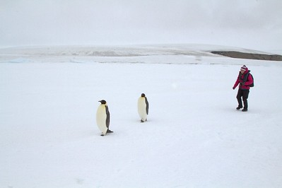 What will I see on Antarctica Cruise