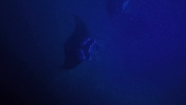 2017-02-20 Swimming with the Manta Rays