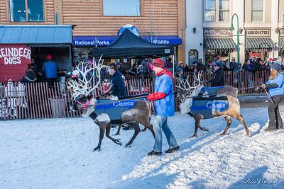 2017/03/04C Reindeer Run