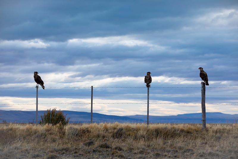 Draví ptáci Patagonie