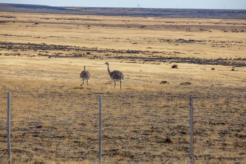 Nanduové Patagonie