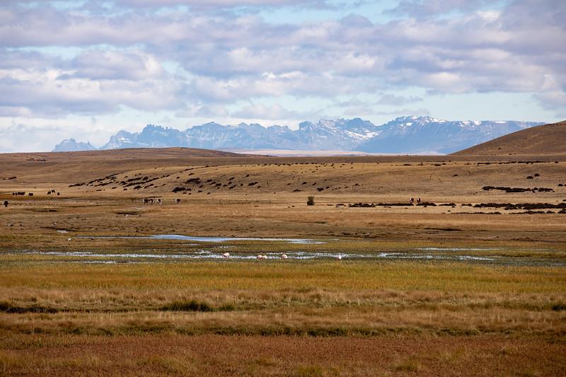 Plameňáci Patagonie