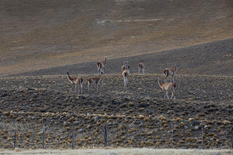 Lamy Patagonie
