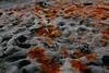 Lichen, Durras Beach