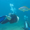 Scuba diving in Aruba