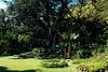 Waimea Bay Village (on site of ancient Hawaiin Village). Dryland sweet potato beds.