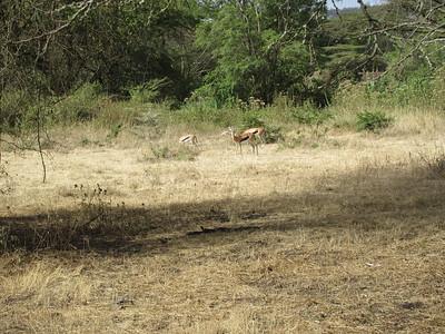 Farley 2018 Kenya