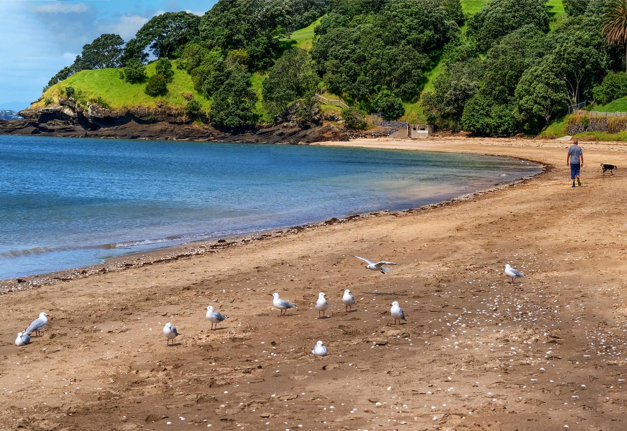 2018-03-13  Cheltenham Beach, Devonport, near Auckland, New Zealand, coords: 36.8242S, 174.8096E