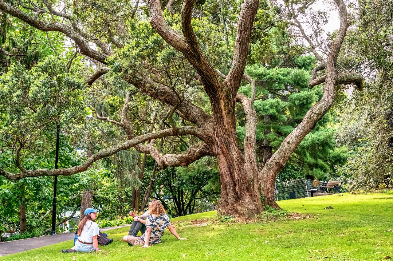 """2018-03-10 Albert Park, Auckland, New Zealand, coords: 36°51'2"""" S 174°46'1"""" E"""