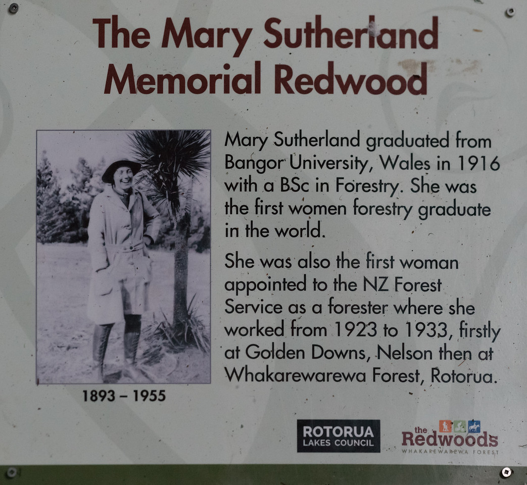 """2018-03-16 Plaque positioned in redwood forest honoring  the first woman to graduate in forestry. Coords: 38°9'36"""" S 176°16'12"""" E. Rotorua, New Zealand. After experimentation, the Radiata Pine [originally, native to central and southern coastal California] was found to be the most desirable tree for commercial tree farming. """"In the southern hemisphere, where pines are to a large extent absent, Radiata Pine is the most commonly planted and cultivated pine. It is valued on plantations for its fast growth and utility as both a source of construction lumber as well as wood pulp in the paper industry."""" """"Radiata Pine is grown almost exclusively on plantations—most notably in Chile, Australia, and New Zealand."""""""