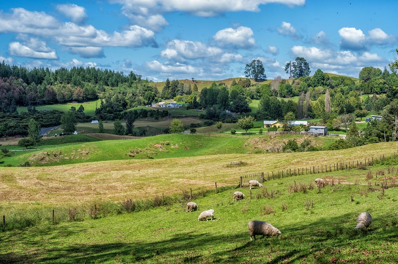 2018-03-14 Pastoral scene near Waitomo, New Zealand. SW of Hamilton in the northern island.