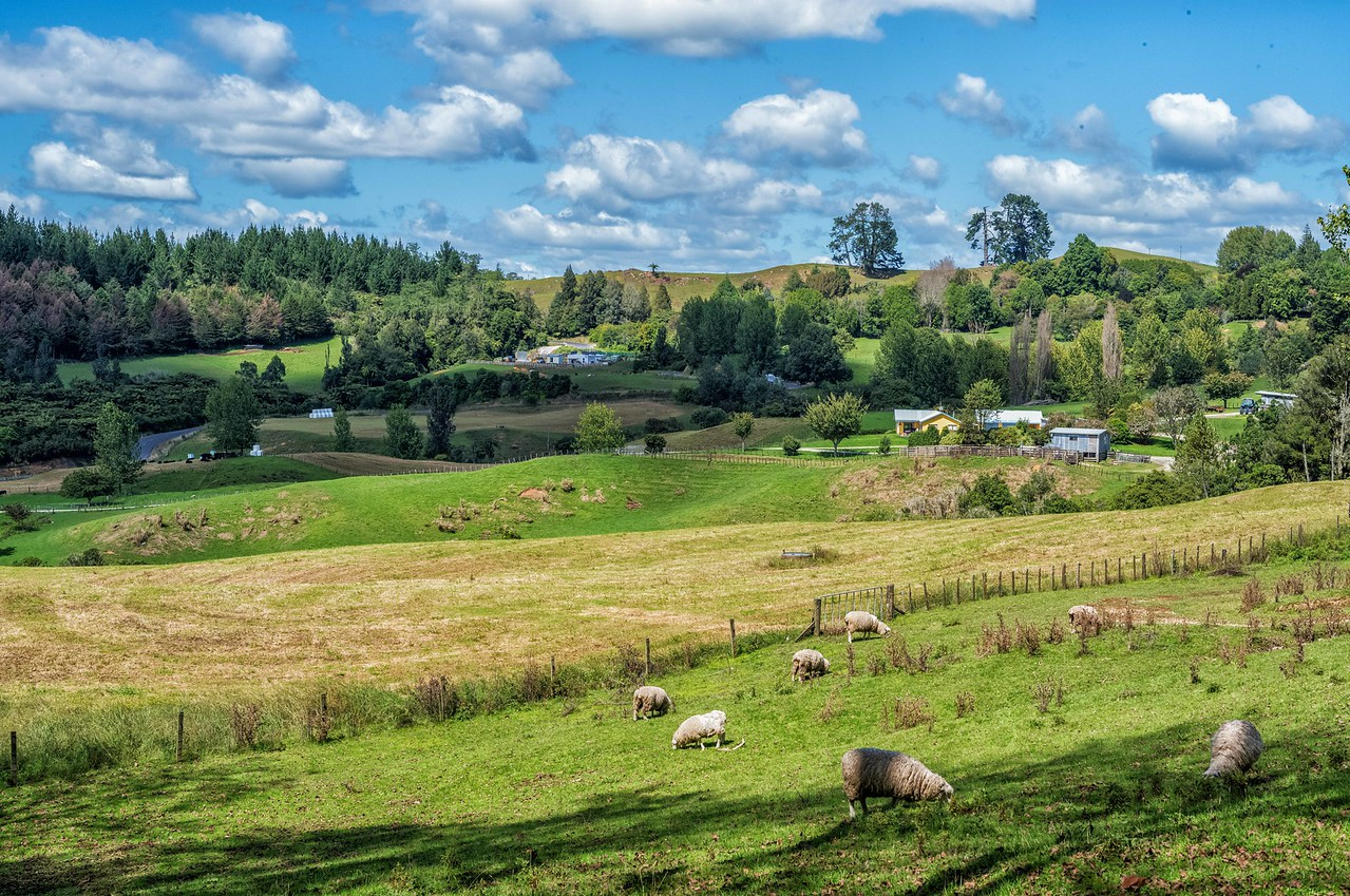 2018-03-14 Pastoral scene near Waitomo, New Zealand. SW of Hamilton in the northern island.