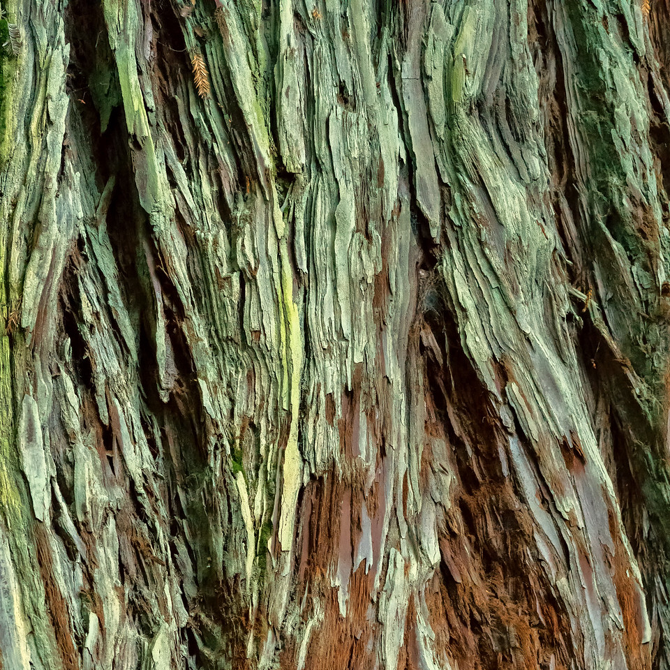 "2018-03-16 Redwood forestry center - near Rotorua, New Zealand.  Coords: 38°9'34.998"" S 176°16'13.001"" E"