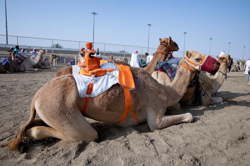 Katar velbloud robot