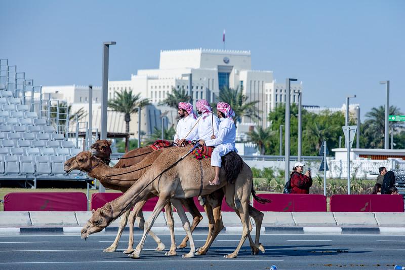 velbloudi Katar vojenská přehlídka