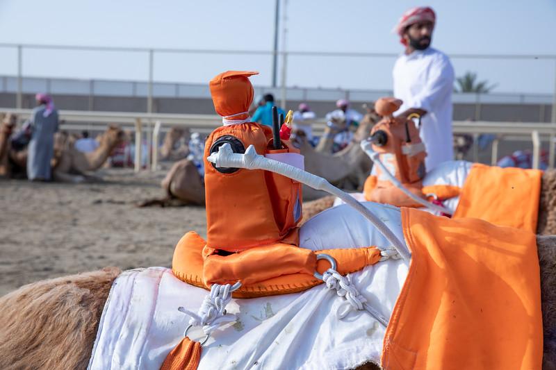 Katar robot velbloud