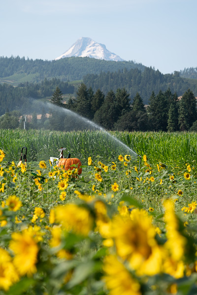 2018 Oregon Packer Orchards