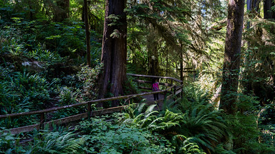 Cedar Bog Trail, Lake Quinault