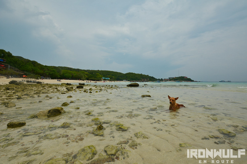 A dog cooling off at Hardtien beach
