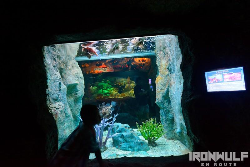 Coral Reef aquarium zone