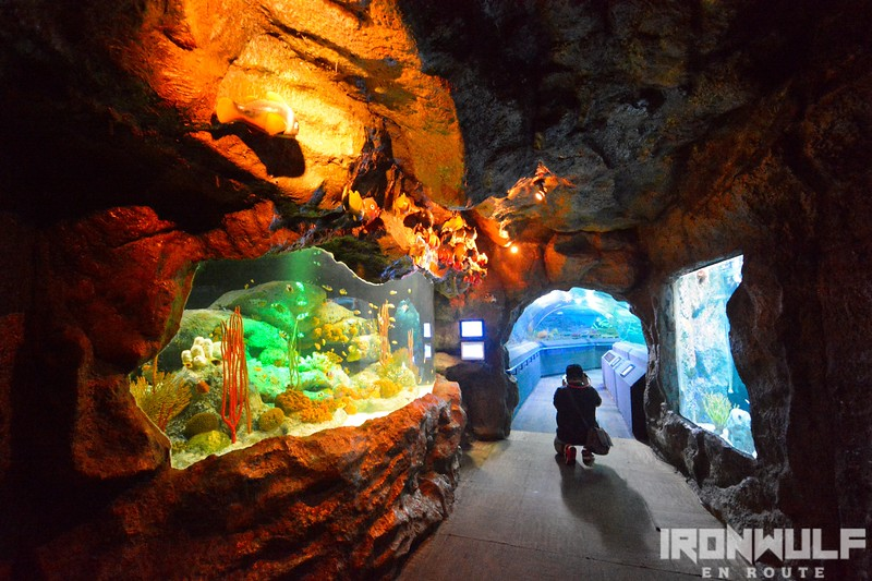 The coral reef zone leading to the aquarium tunnel