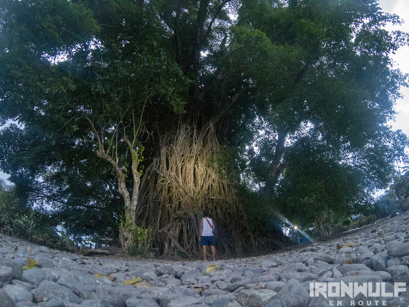 The millennium tree