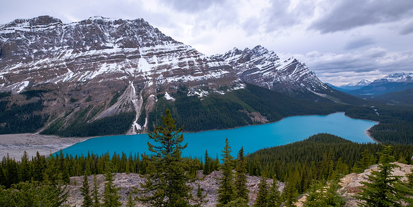 Cool afternoon view of Peyto Lake from Bow Summit, looking north up the Icefields Parkway valley.