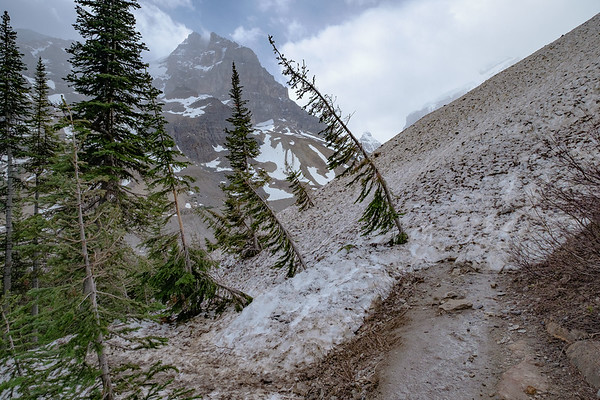 Avalanche obstruction of the train up to the Plain of Six Glaciers tea house and view point.