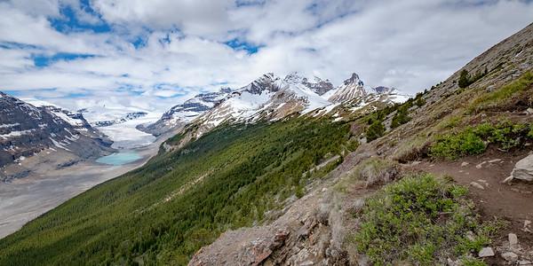 View of the Parker Ridge trail adjacent to  the Saskatchewan Glacier.