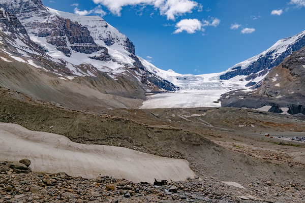 Main Athabaska Glacier with trailhead, and ice buggy tours in the distance.