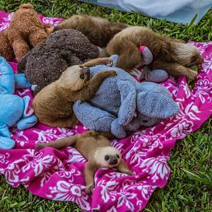 Stuffed Animals?