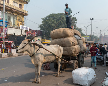 A man prepares the load on his cart, in Old Delhi.