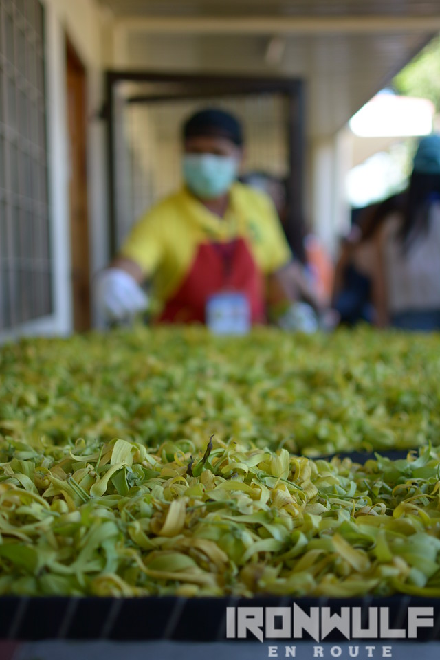 Manual extraction is still used for ylang-ylang production