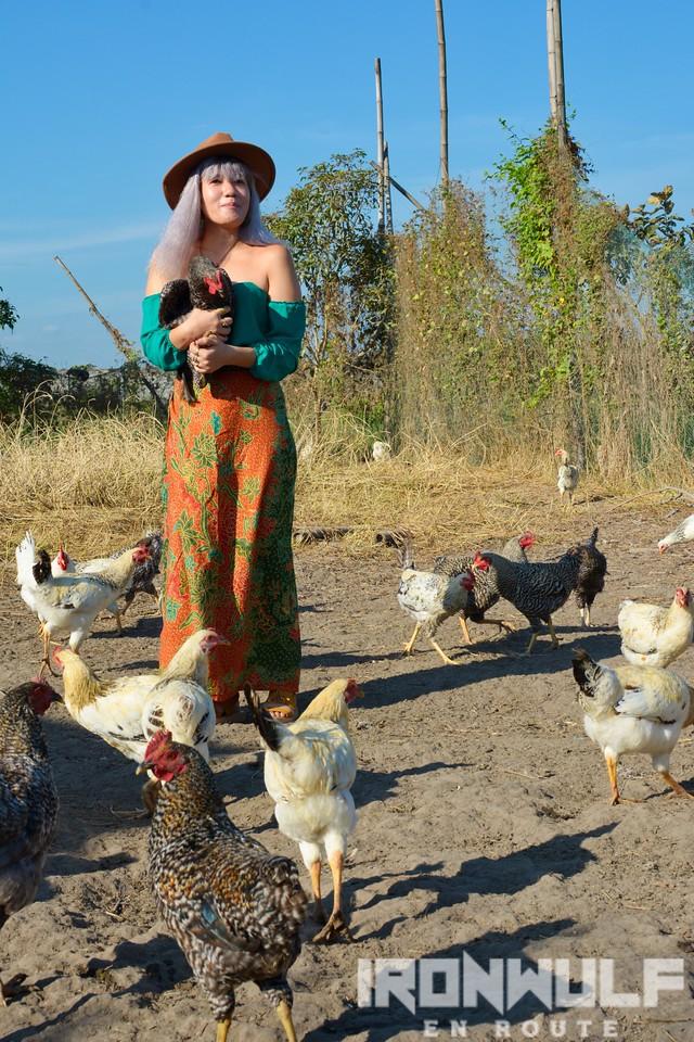 Free range chicken love