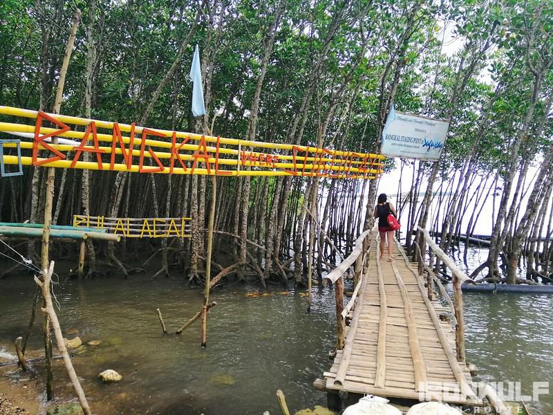 Mangroves at Bankal Port