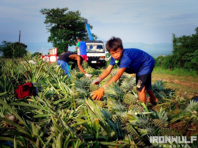 A young worker at the farm