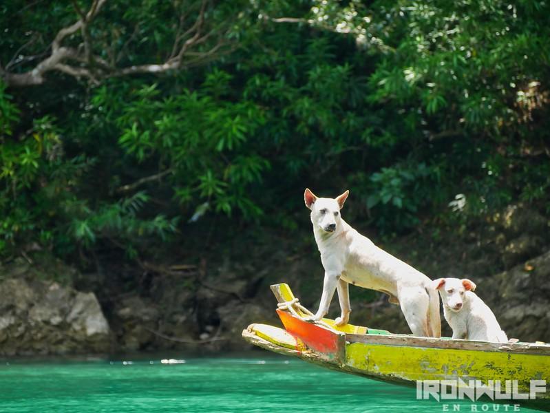 Dogs enjoying the torpedo ride