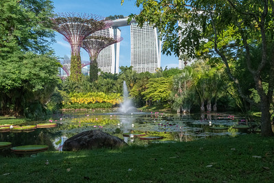 Supertrees in Marina Bay Gardens, Singapore