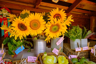 Sunflowers for Sale
