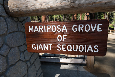 Mariposa Grove of Giant Sequoias, Yosemite National Park.