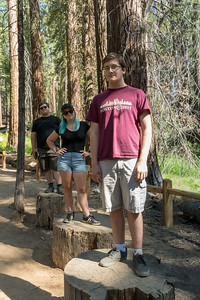John, Mara, Andy on stumps in Mariposa Grove of Giant Sequoias, Yosemite National Park.