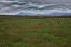 Tasmanian Agriculture
