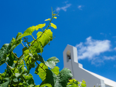 Ataraxia Winery