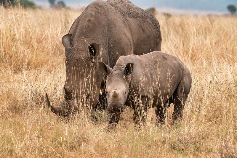 Baby Rhino in Nairobi